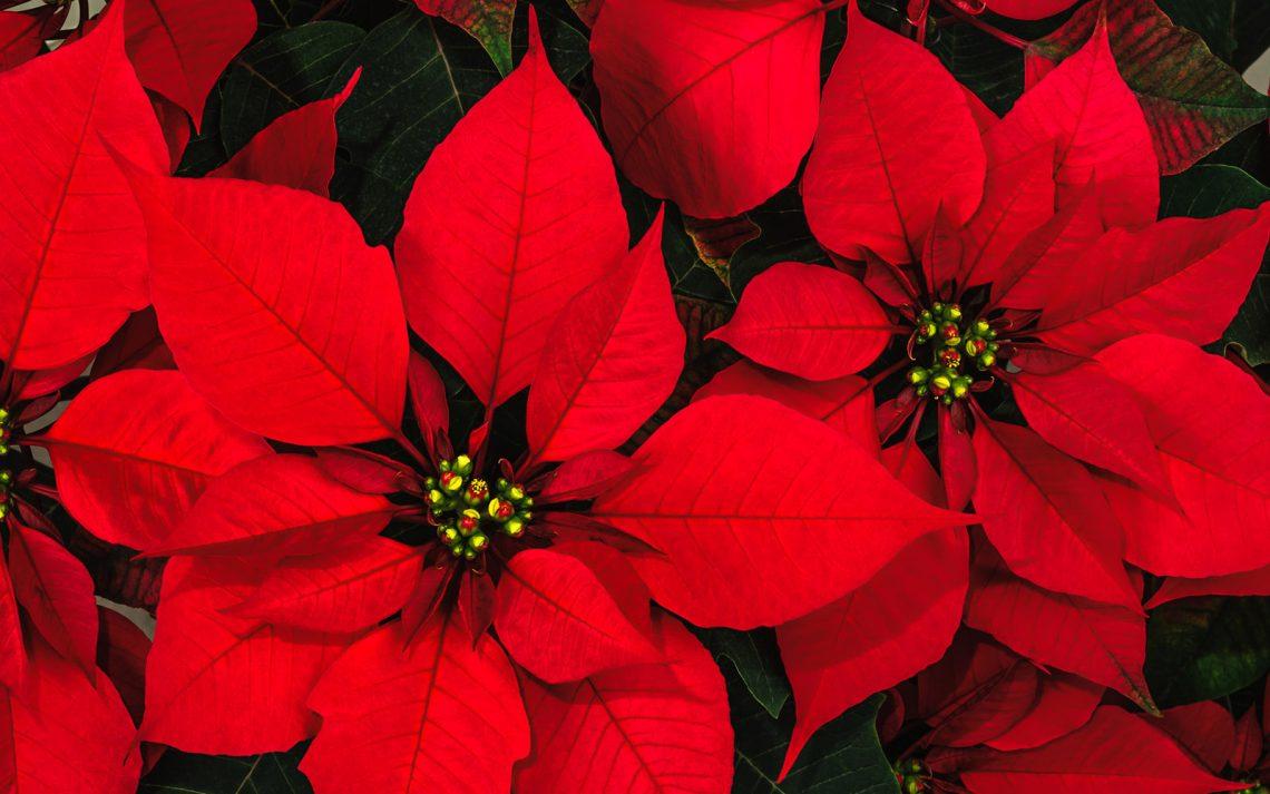 Il racconto della Stella di Natale che meglio insegna il vero senso di questa festa