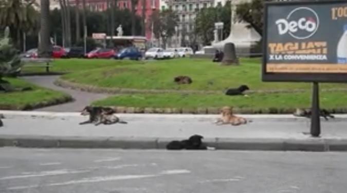 """Napoli, la denuncia: un branco di cani randagi ha """"occupato"""" piazza Vittoria"""