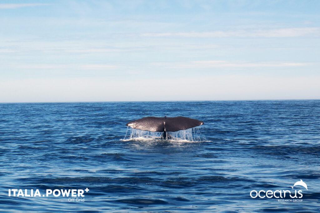 """Oceanus: """"Lettere dal futuro - i suoni perduti"""", il podcast sulla promozione del green life style"""