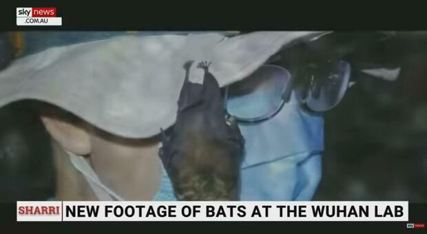 Wuhan, in un video pipistrelli vivi nel laboratorio nel 2017
